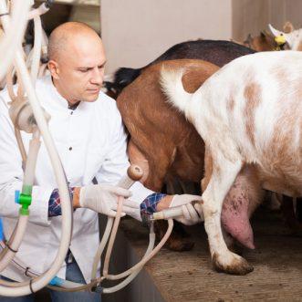 Pourquoi utiliser les produits à base de lait de chèvre sur la peau